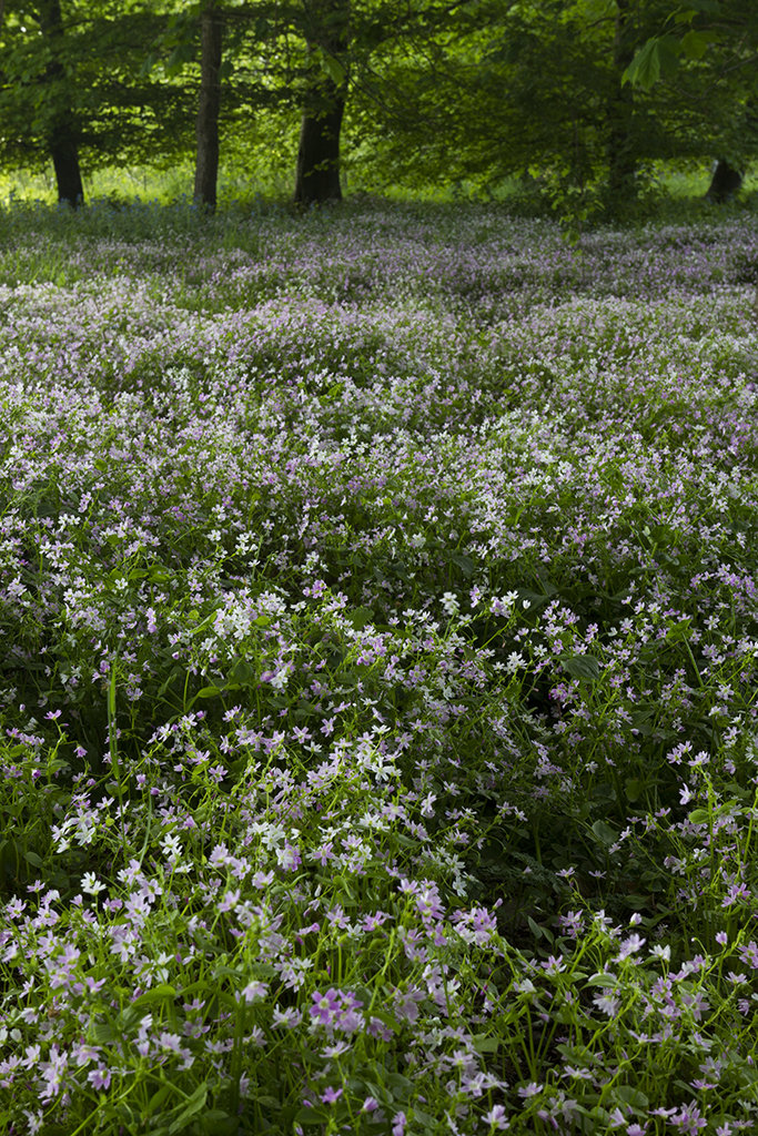 wildflowers, leith hall