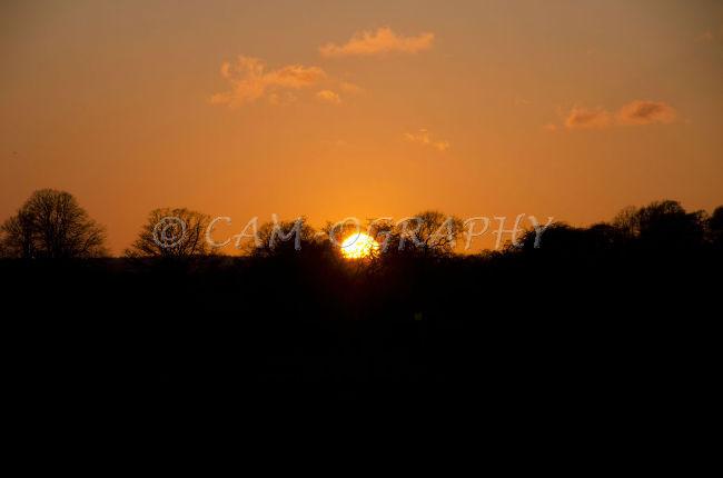 Sunset Westwood pasture 1