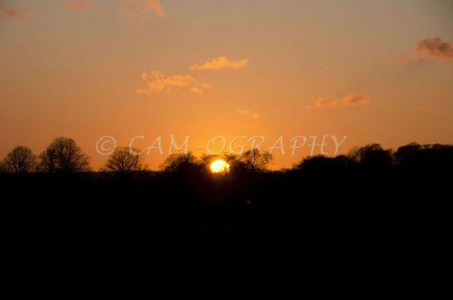 Sunset  Westwood Pasture 2