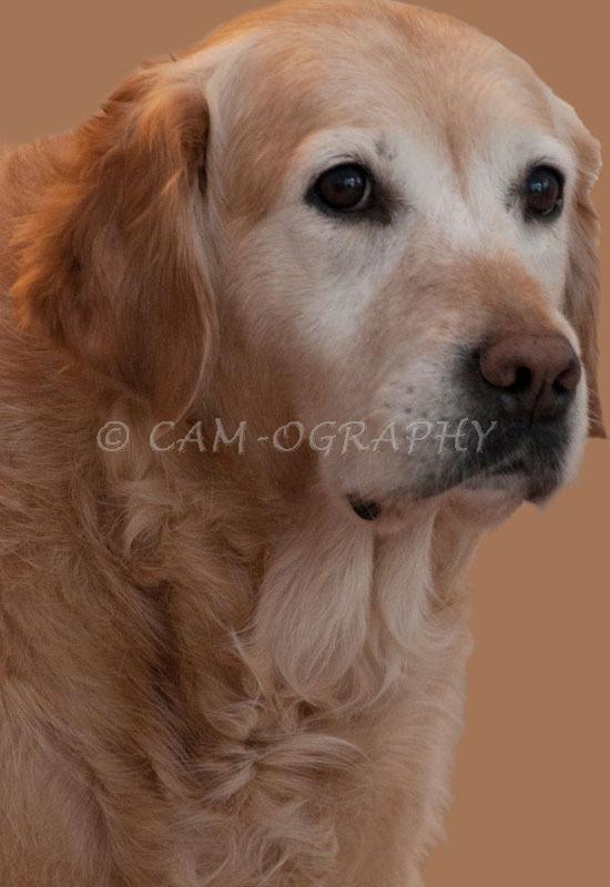 pet portrait 21
