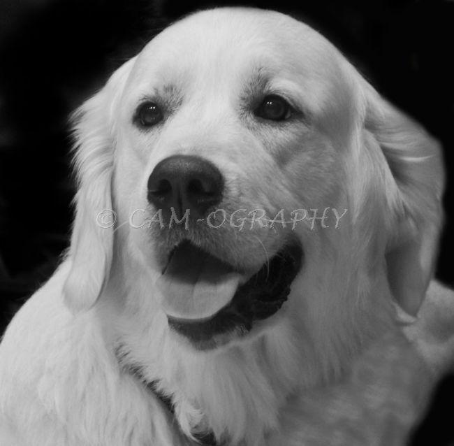 pet portrait 5