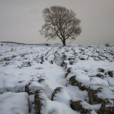 CSL049-Lone Ash Tree Malham Lings-7071