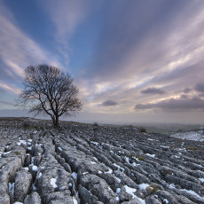 CSL056-Early Wintery Sunset at Solitary Malham Tree-7253