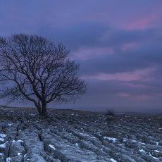 CSL058-Pink Sunset at Malham Ash Tree-7310