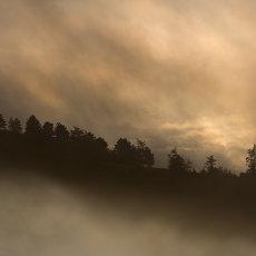 CSL007-Misty Hancock Woods Derwent Valley-5945