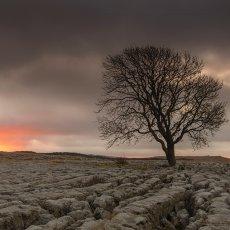 CSL074-Solitary Ash Tree at Sunrise over Malham Lings-7350