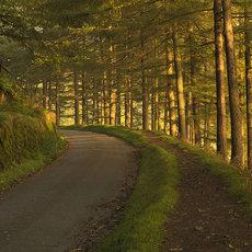 CSL091-Derwent Valley Peak District-5964