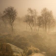 CSL111-Misty Trees-6478