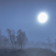 CSL112-Misty Trees-6476
