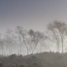 CSL119-Misty Trees-6484