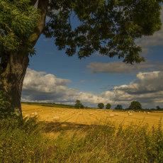CSL019-Idyllic English Countryside-4268