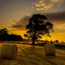 CSL021-English Summer Sunrise-4548