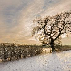 CSL026-Tree in Snow-0479