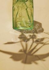 'Vase of shadows'