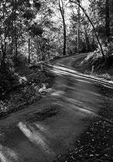 'Bush road'