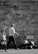 'Dog - walking'