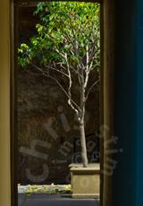 'Tree through door'