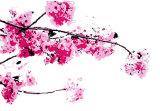 Blossom 1 (Code BL2)