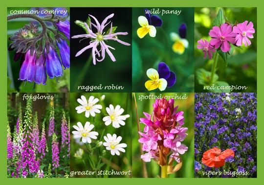 Wild Flower Collection