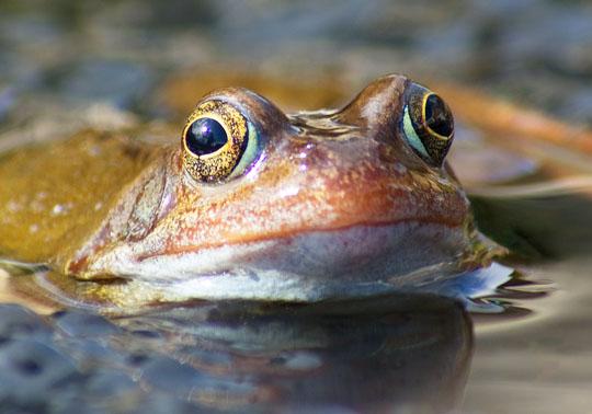 Frog & Spawn
