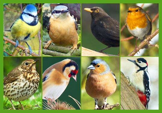 Garden Birds (Large)