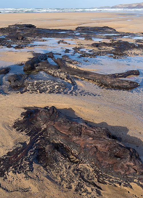 Submerged Forest - 5 - Freshwater West