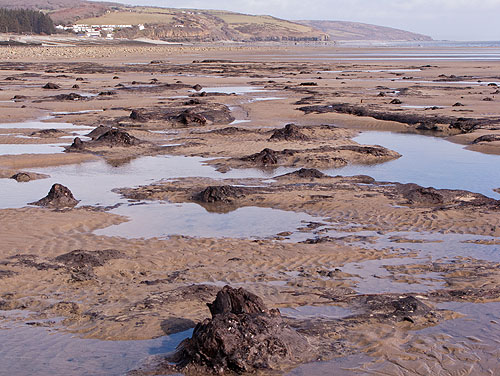 Submerged Forest -1 - Amroth