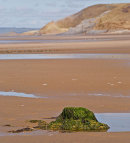 Submerged Forest - Broughton Bay