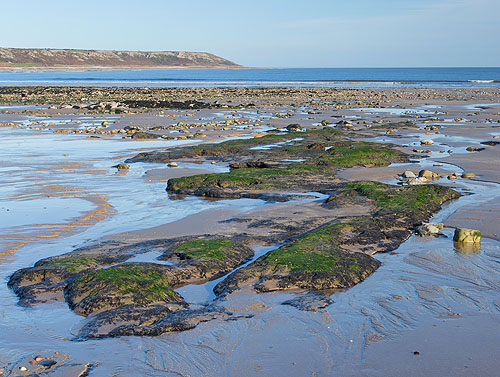 Submerged Forest - Port Eynon Beach