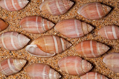 Sea Slug -