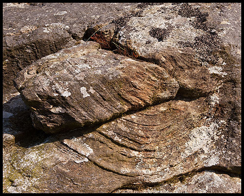 Rock - Rhyolite with Flow Banding