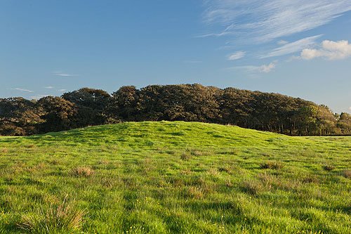 Dry Burrows - Round Barrow Cemetry