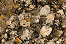 Rock - Conglomerate
