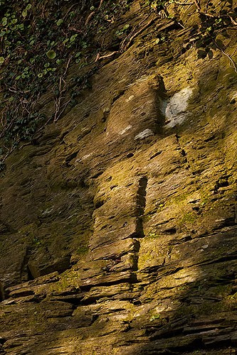 Pilgrims Stone Cross - Nevern