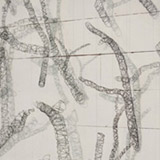 Thicket - Detail