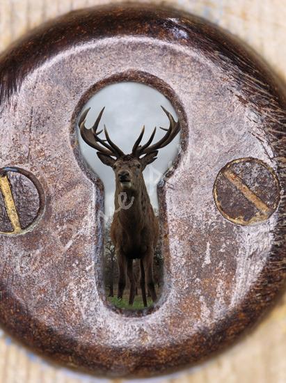 deer through a keyhole