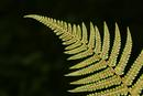0016 Fern and Spores