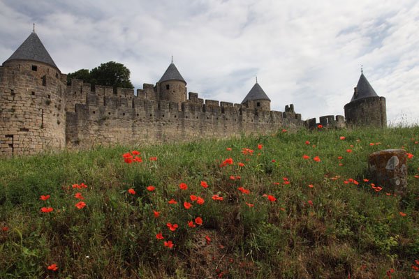 01D-2643 The Flowers of the Common Poppy Papaver rhoeas Overlooked by the Ramparts of the Medieval City of Carcassonne Aude France.