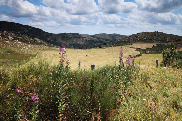 01D-7510 Hay Meadows Near the Village of Finiels in the Parc National De Cevennes France