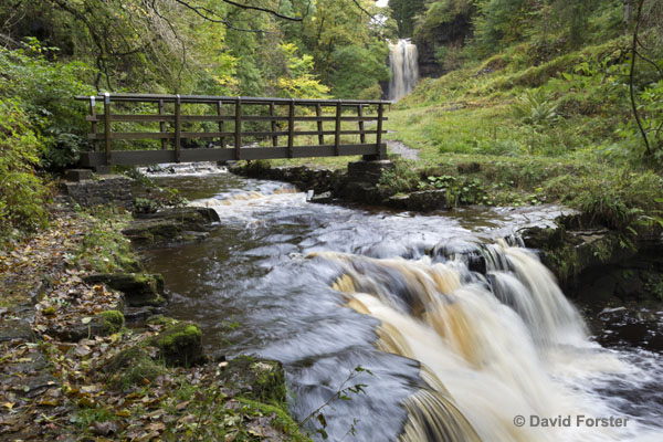 01M-5320 Ashgill Force and Bridge on the South Tyne Trail Cumbria UK