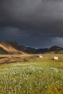 Storm Clouds over the Barmur Rhyolite Mountains with Icelandic Sheep Next to the River Jokulgilskvisl at Landmannalaugar in the Fjallabak Area of Iceland