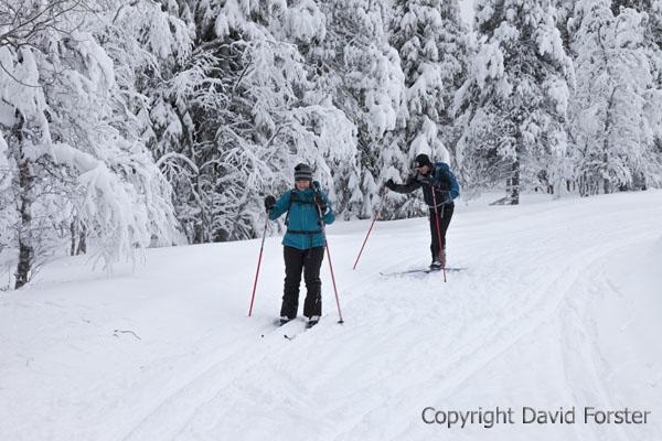 05D-0841 Cross Country Skiers in the Pallas-Yllastunturi National Park Near Yllas in Finnish Lapland Finland.