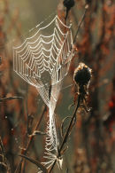 06-9894 Dew Coated Spiders Web