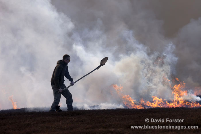 06D-6444 Gamekeeper Controlling Heather Burning in Upper Teesdale County Durham