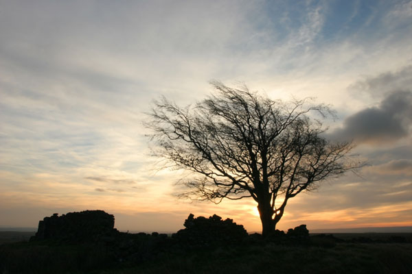 07-0193 Tree with Dawn Sky, Loups Hill, Teesdale, County Durham