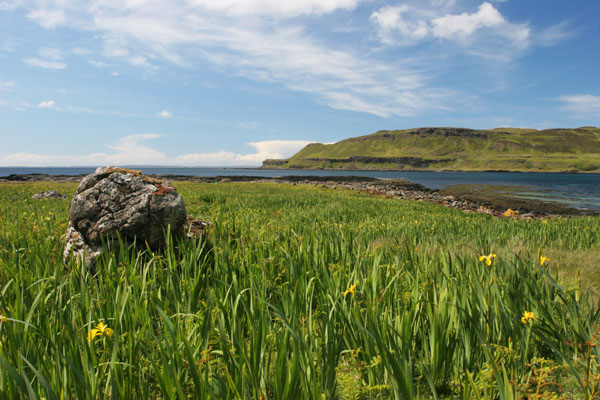 07-1724 Yellow Iris (Iris pseudacorus) and View Across Calgary Bay to the Mornish Peninsula, Island of Mull,