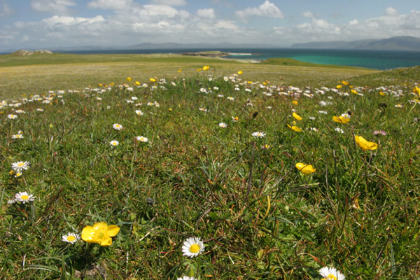 07-1845 Machair Grassland on the Isle of Iona
