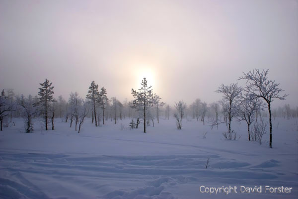 07-4988 Winter Sun Shining Through a Fog of Ice Crystals Lapland.