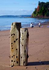 Teignmouth beach 3