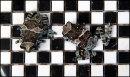 Frog Chess